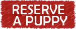 Reserve a purebred doberman puppy