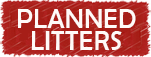 planned-litters-button